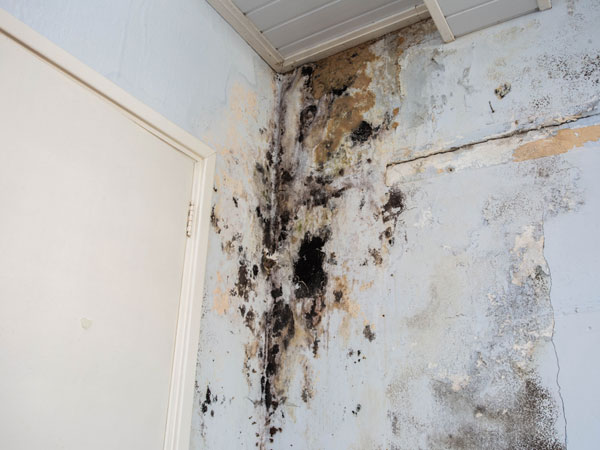 Wall effected by damp at Manchester house