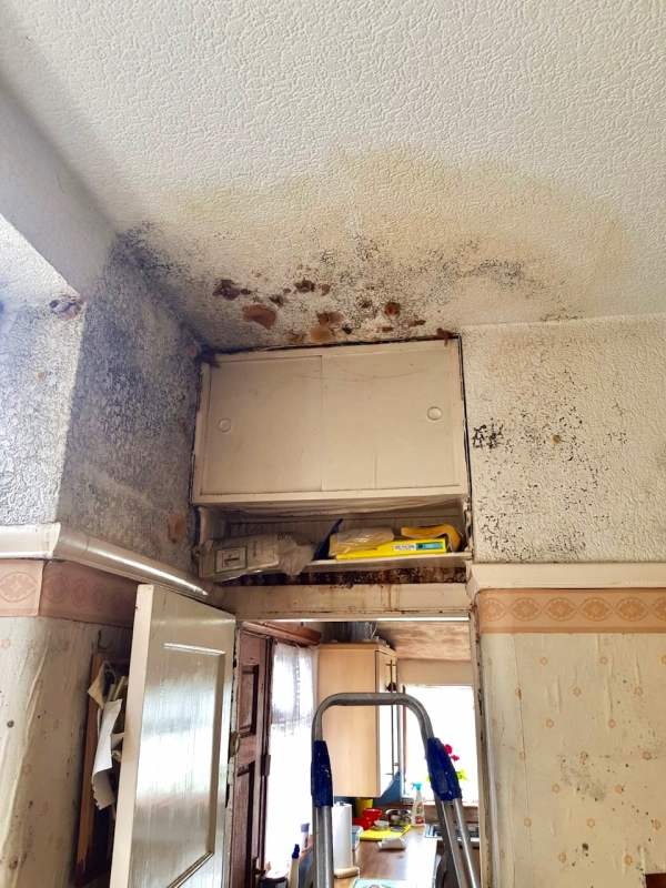 HOME IMPROVEMENT Renters can sue landlords over damp and mouldy homes from today